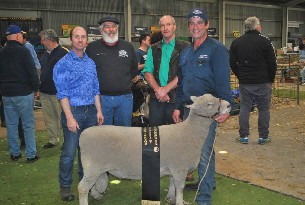 Supreme Champion Ram of the Warrnambool Show 2018