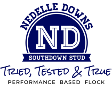 Nedelle Downs Southdown Stud | Tried, Tested & True
